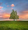 Lonely tree - PhotoDune Item for Sale