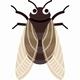 Japanese Cicada 2
