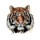 Tiger Head Portrait From a Splash of Watercolor - GraphicRiver Item for Sale