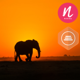Epic Travel in Wildlife Africa