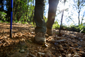 Legs hiking in summer forest mountain - PhotoDune Item for Sale