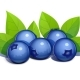 Blueberry With Leaves - GraphicRiver Item for Sale