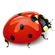 Vector Red ladybird - GraphicRiver Item for Sale