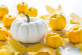 White pumpkin and autumn fruits decoration for Thanksgiving - PhotoDune Item for Sale