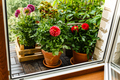 Plants and Flowers on balcony in city apartment - PhotoDune Item for Sale
