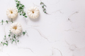 White pumpkins with eucalyptus branches on white background - PhotoDune Item for Sale