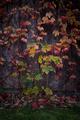 Autumn leaves background - PhotoDune Item for Sale