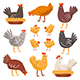 Hen, Bird, Cock, Chicken Set. Domestic Animals. Farm, Countryside Life. - GraphicRiver Item for Sale
