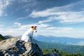 Alone white dog sitting on rock - PhotoDune Item for Sale