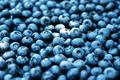 Fresh sweet blueberry berries closeup - PhotoDune Item for Sale