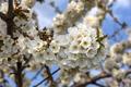 tree in spring - PhotoDune Item for Sale