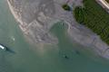 mangrove - PhotoDune Item for Sale