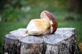 Big white mushroom porcini on wooden plate - PhotoDune Item for Sale