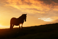 Horse on evening meadow in mountains valley during sunset - PhotoDune Item for Sale