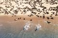 Fur seal colony enjoy the heat of the sun - PhotoDune Item for Sale