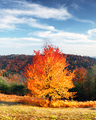 Picturesque autumn mountains with red beech forest - PhotoDune Item for Sale
