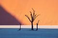 Dead Camelthorn Trees at sunrise - PhotoDune Item for Sale