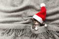 Christmas kitten in red Santa hat sleep with eyes closed, covered with blanket - PhotoDune Item for Sale