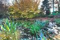 Garden with a pond - PhotoDune Item for Sale