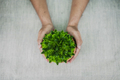 Human hands holding green houseplant in pot - PhotoDune Item for Sale