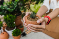 Green beautiful houseplant in pot on gardener woman - PhotoDune Item for Sale