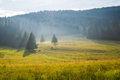 Summer mountain meadow - PhotoDune Item for Sale