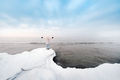 A tourist stands on the shore of the Baltic sea in winter. Winter near the Baltic States of Tallinn - PhotoDune Item for Sale