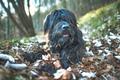 Mountain shepherd dog - PhotoDune Item for Sale