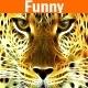 Funny - AudioJungle Item for Sale