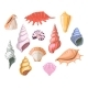 Shells of Sea Seashell and Marine Snail Scallops - GraphicRiver Item for Sale