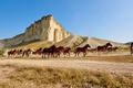 Galloping herd of horses - PhotoDune Item for Sale