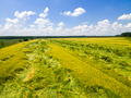 Wheat field from above - PhotoDune Item for Sale