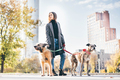 Woman walking with two dog at the autumn public city park. - PhotoDune Item for Sale