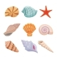 Colorful Sea Shells Set - GraphicRiver Item for Sale