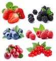 Set of berry - PhotoDune Item for Sale