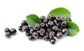 Aronia berry - PhotoDune Item for Sale