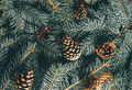 Christmas tree branches and cone on wooden background. - PhotoDune Item for Sale
