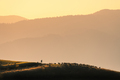 Silhouette of herdsman with herd of sheep, dogs on the hill - PhotoDune Item for Sale