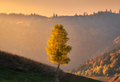 Beautiful alone tree on the hill in mountains at sunset in autumn - PhotoDune Item for Sale