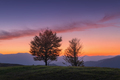 Beautiful trees on the hill in mountains at sunset in autumn - PhotoDune Item for Sale