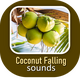 Coconut Falling Sounds