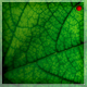 Green Zoom Textures - GraphicRiver Item for Sale