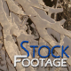 """Winter snowy Branches"" FullHD Stock Footage H.264 - VideoHive Item for Sale"