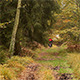 Woman Who Cycling Through Autumn Forest - VideoHive Item for Sale
