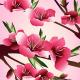 Cherry Blossom Illustration - GraphicRiver Item for Sale