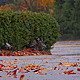 Autumn Rain 3 - VideoHive Item for Sale