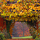 Autumn Rain 5 - VideoHive Item for Sale