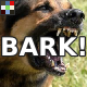 Big Dog Bark