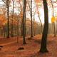 Fall Scene - VideoHive Item for Sale