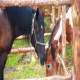 Horse Stable 1 - VideoHive Item for Sale